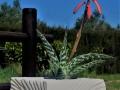 Ventaglio_porta piante