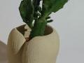 Cuore_porta piante