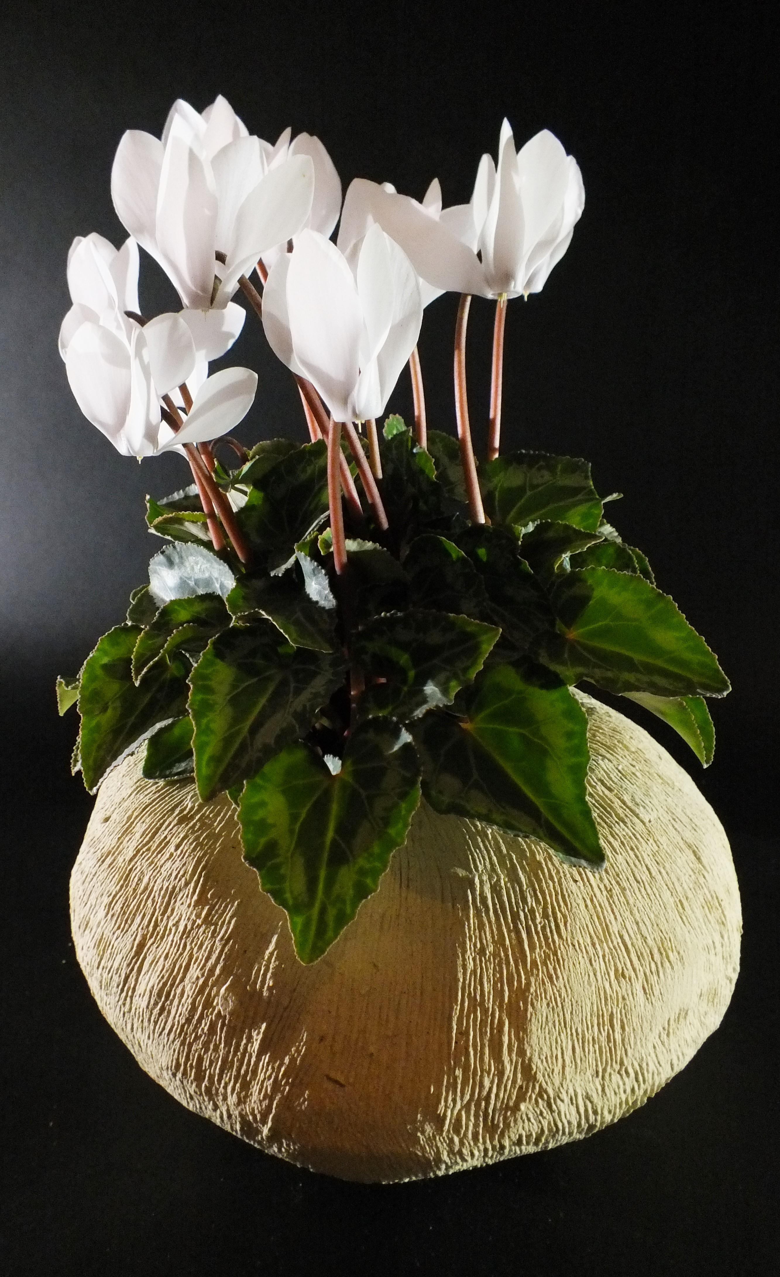 India_porta piante_nero2