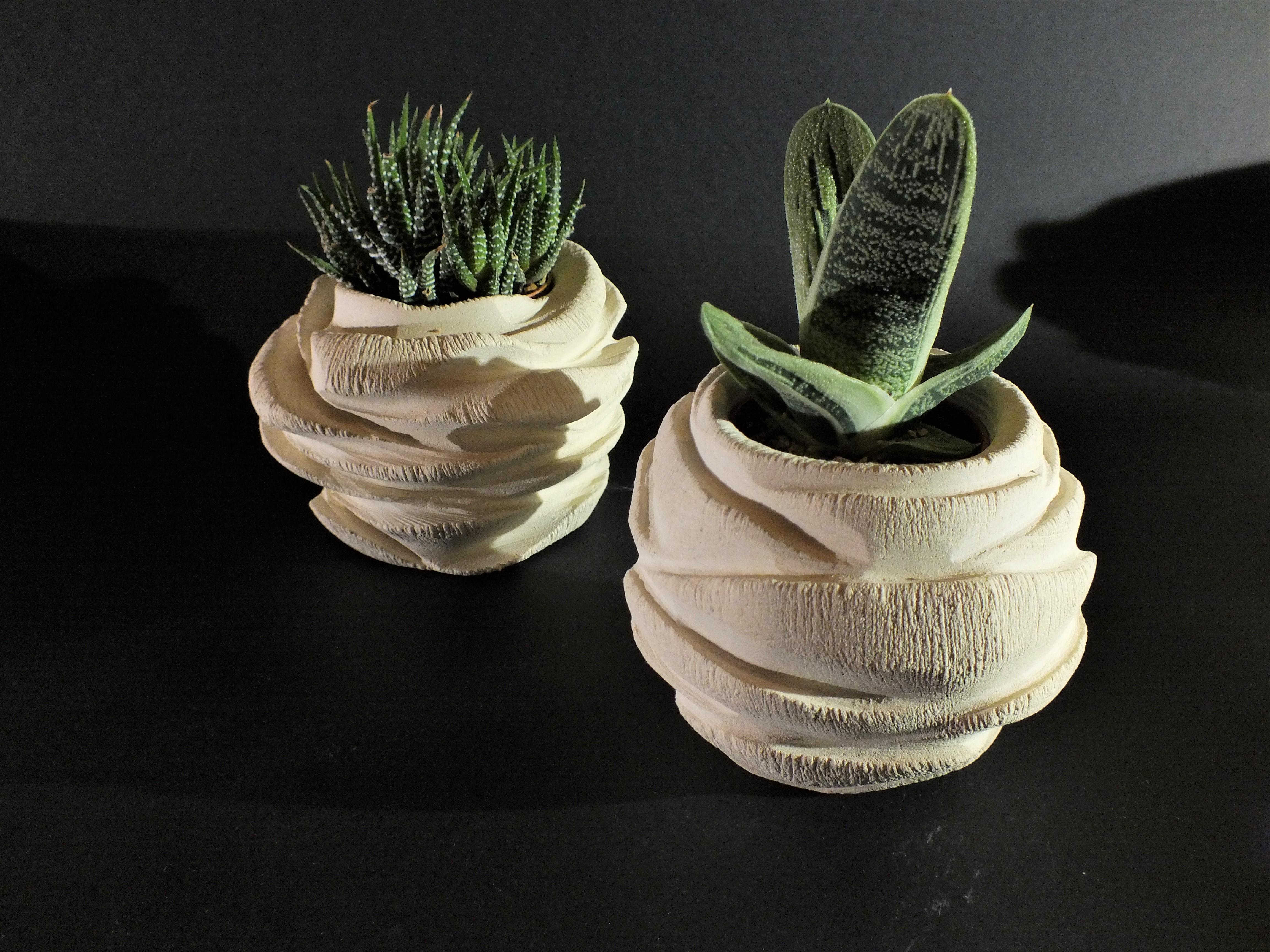 Rosa_porta piante