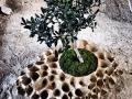 Scoglio_porta piante